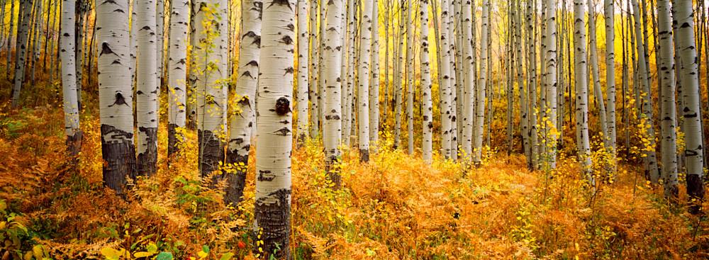 COL-T020 • Aspen Grove, Colorado