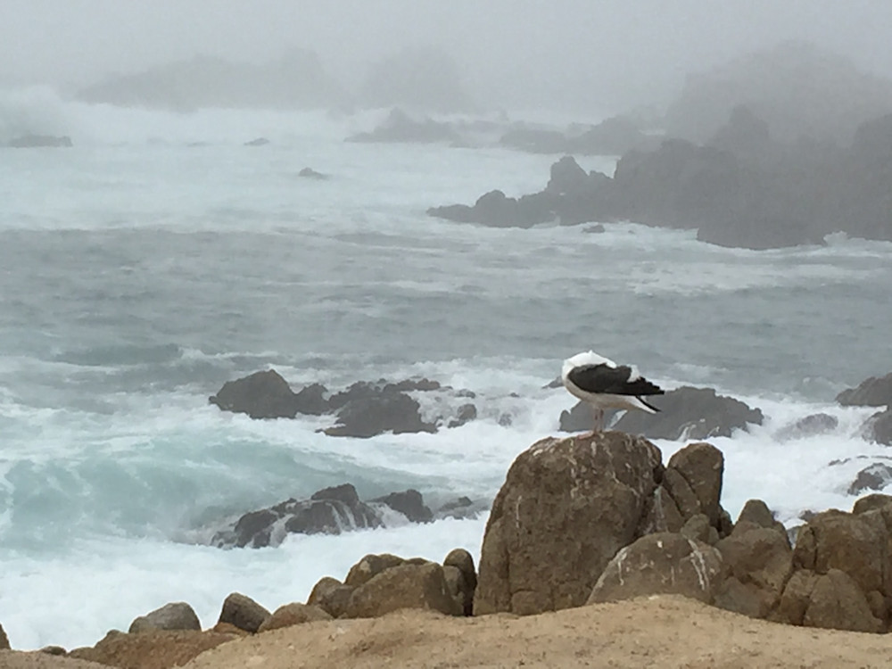 Against the Wind in Carmel, California