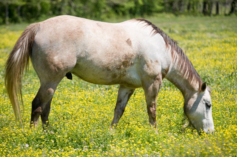 Horse in Wildflowers, Damon, Texas