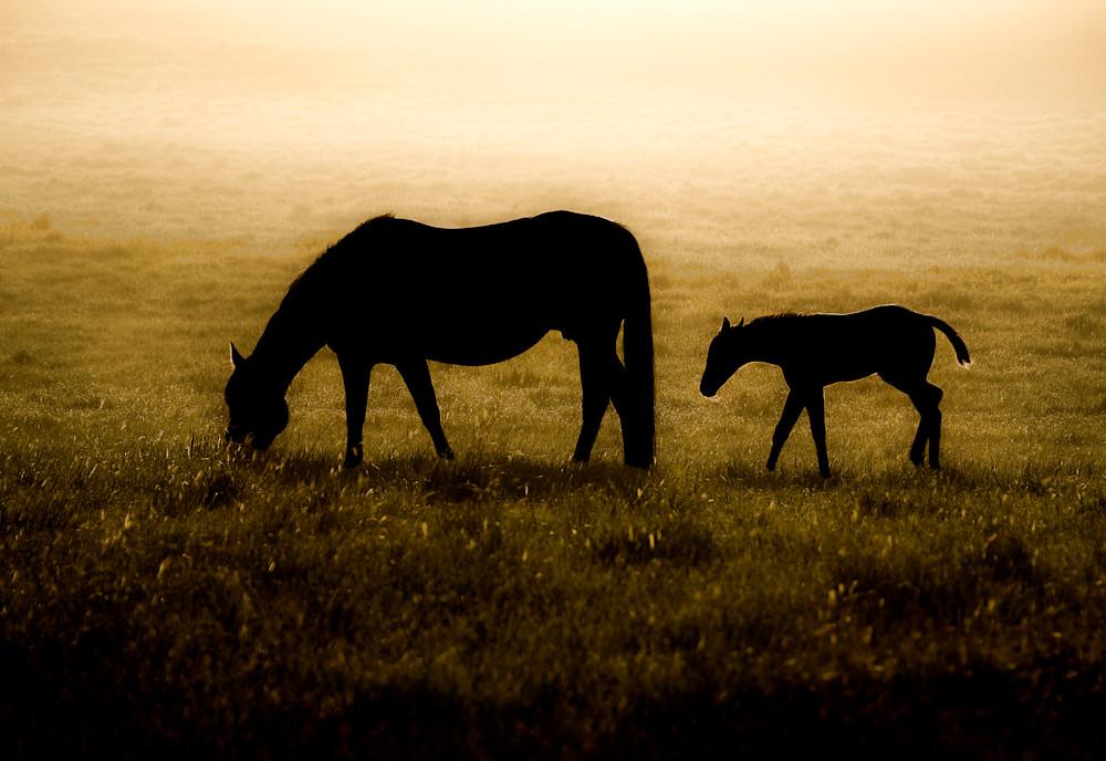 Dawn Photography Art | Craig Edwards Fine Art Images