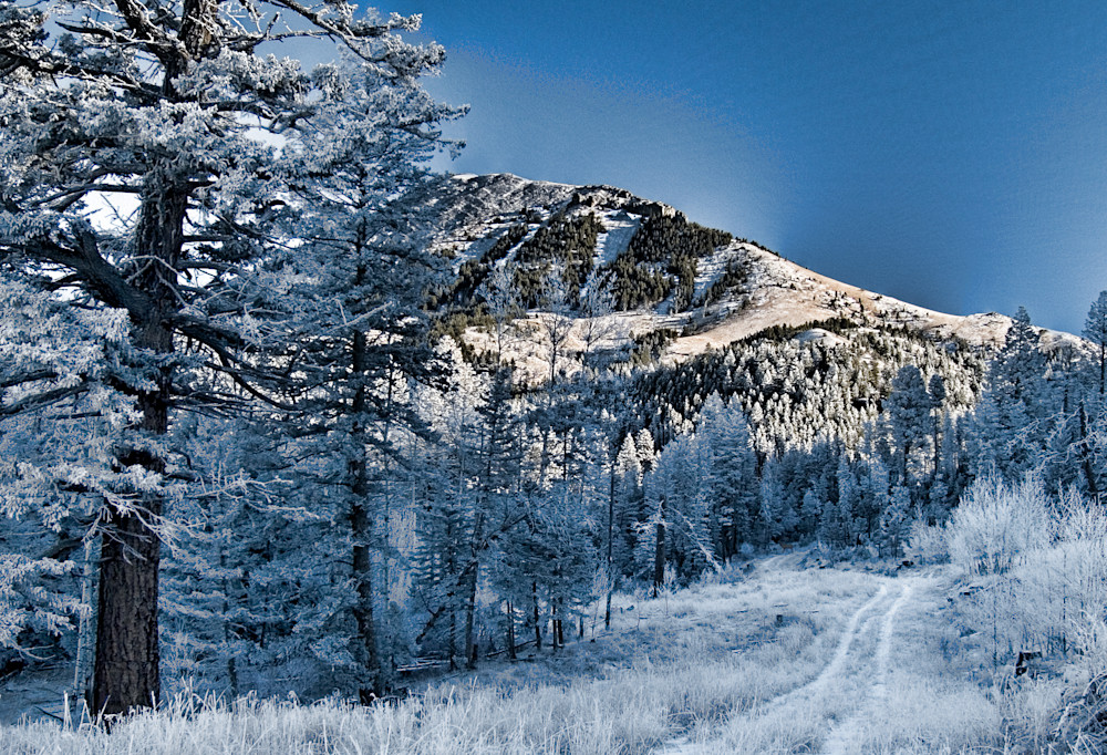 Elk Trail Photography Art | Craig Edwards Fine Art Images