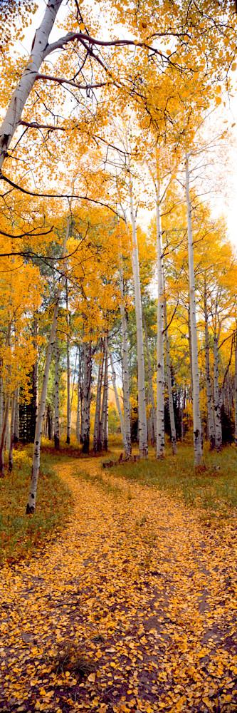 COL-T031 • Aspen Trail