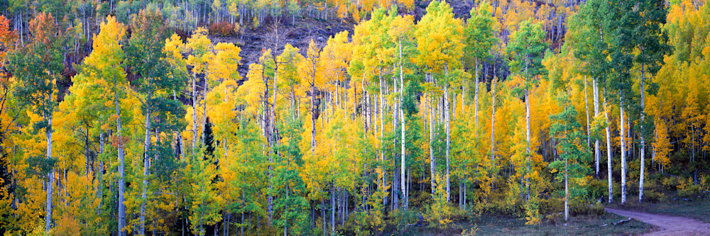 COL-T022 • Aspen Grove, Fall