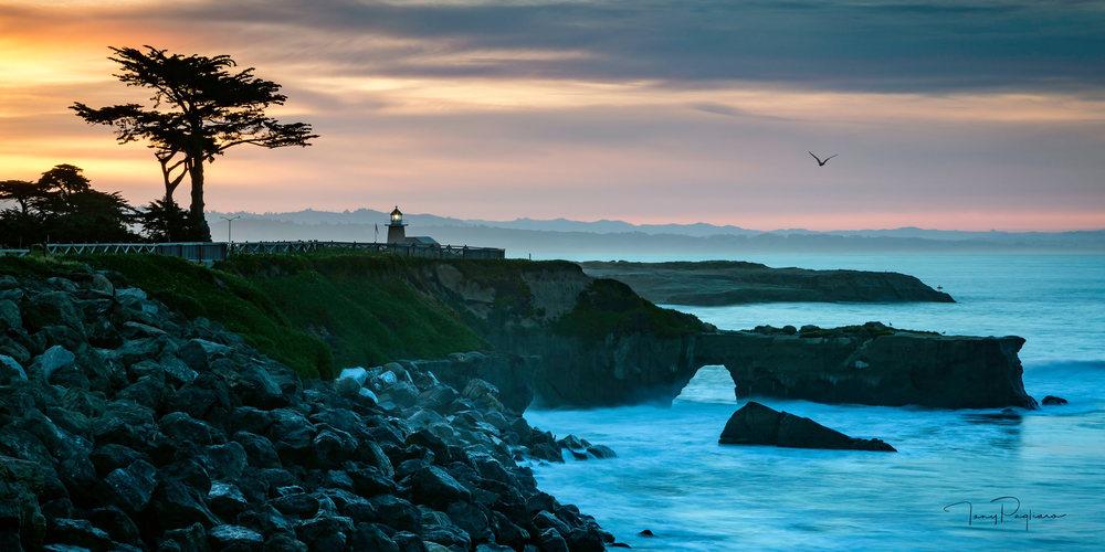 Soul Of Santa Cruz Art | Tony Pagliaro Gallery