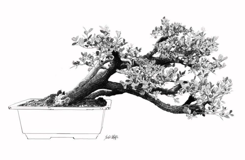 "Digital etching by Eric Wallis, inventor of the technique, titled, ""Bonsai Six."""