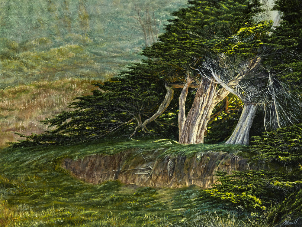 Cypress On The Mendocino Headlands Art | Cypress Cove Creations