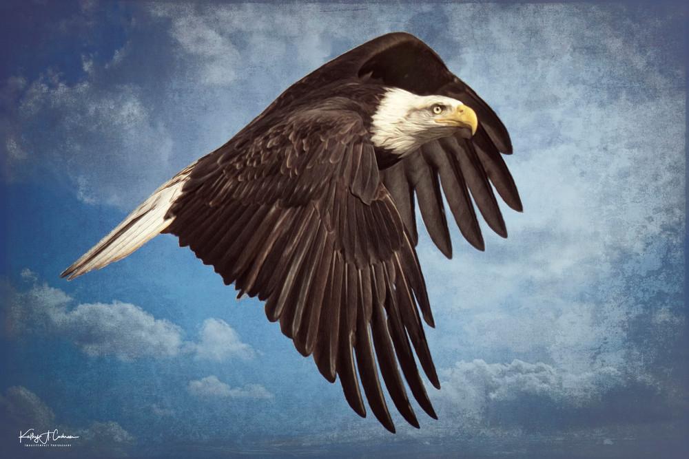 Banking Eagle Photography Art | Images2Impact