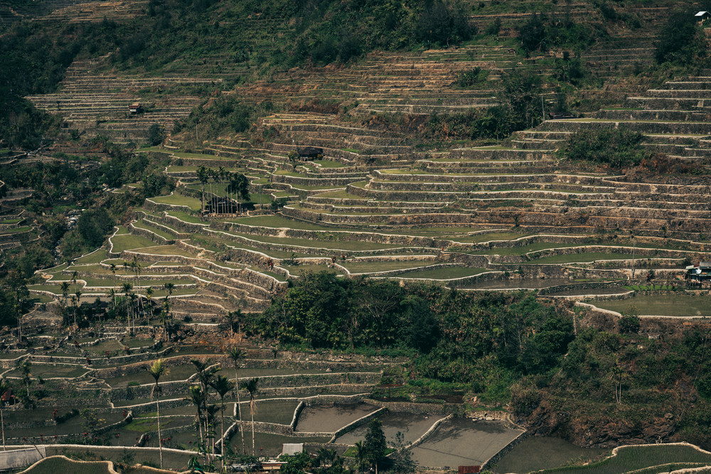 northernluzorn banaue 0049