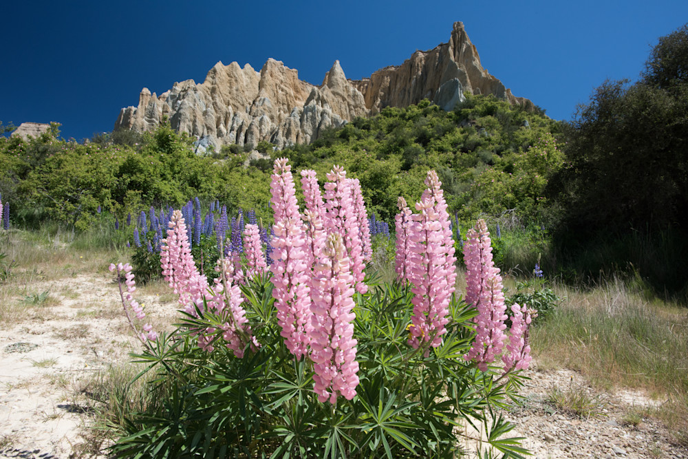 Lupins at Omarama Clay Cliffs
