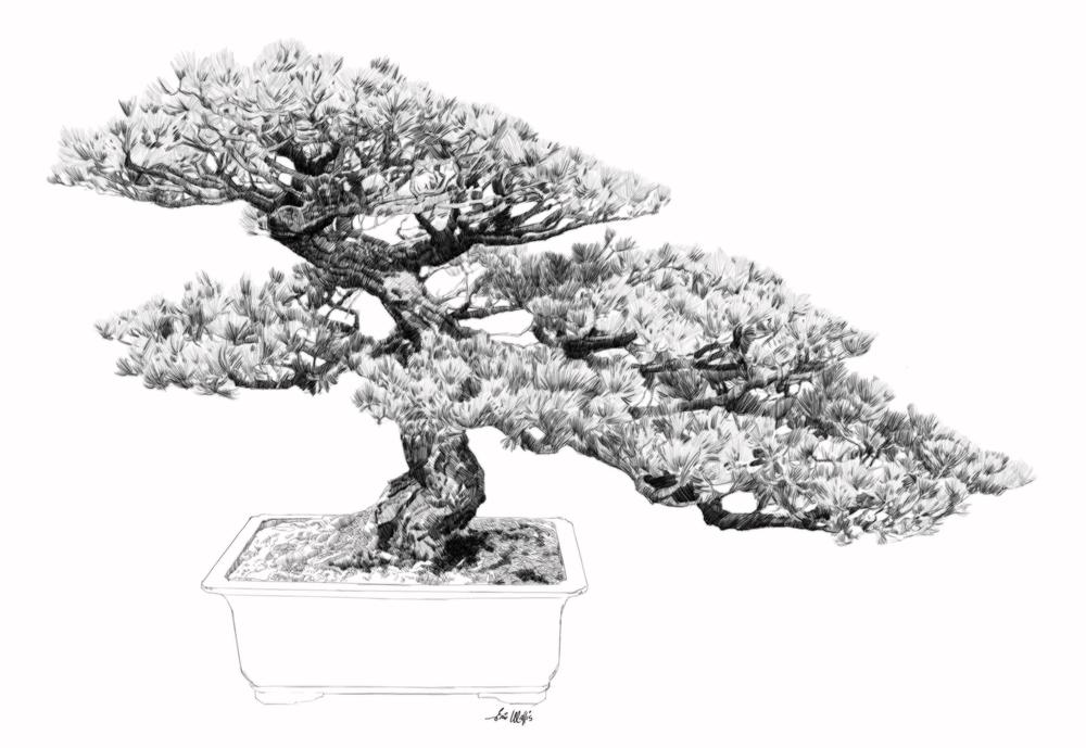 "Digital etching by Eric Wallis, inventor of the technique, titled, ""Bonsai Seven."""