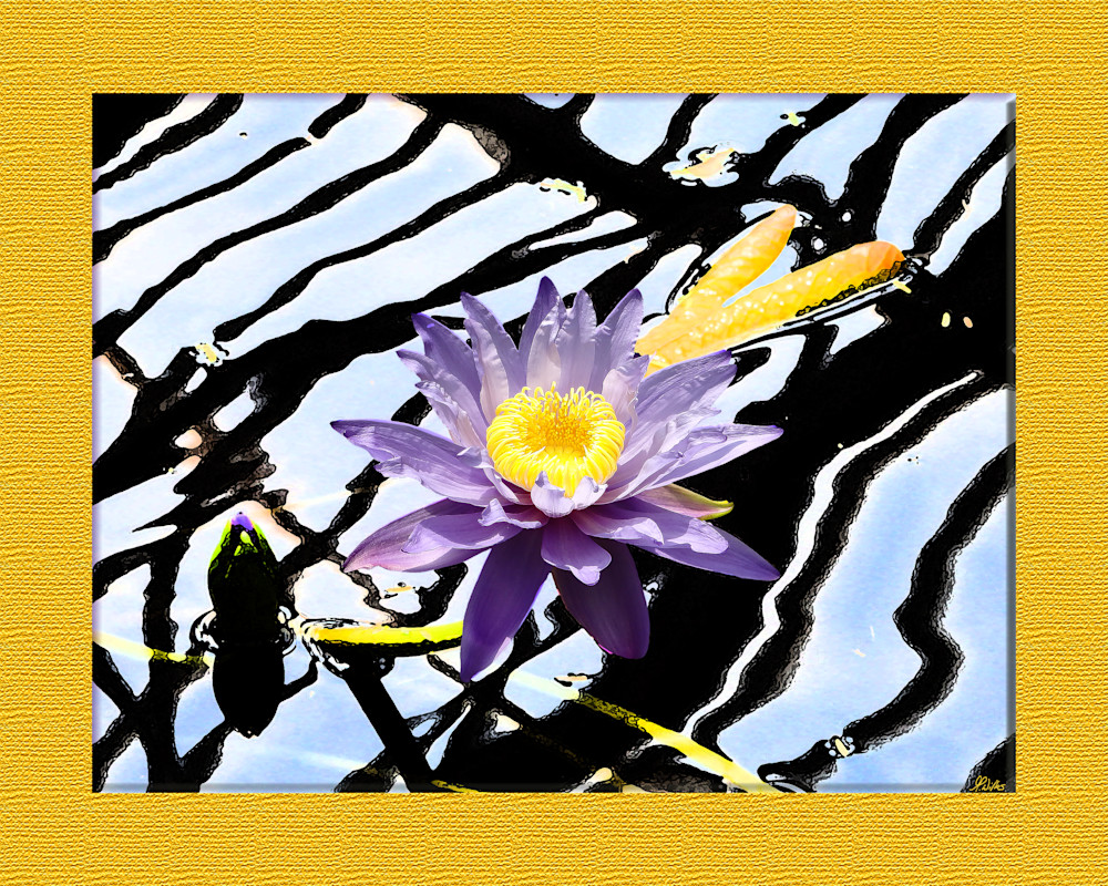 Purple Water Lily print of photograph transformed into digital art for sale by Maureen Wilks