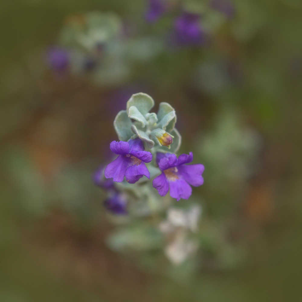 flowers--2