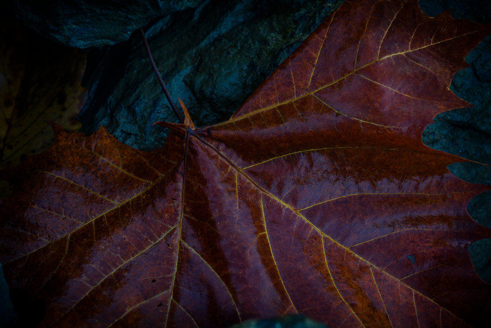 Leaves 2 Photography Art | Sandy Adams Outdoorvizions Photography