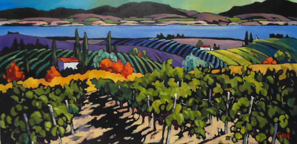 vineyard in the Okanagan