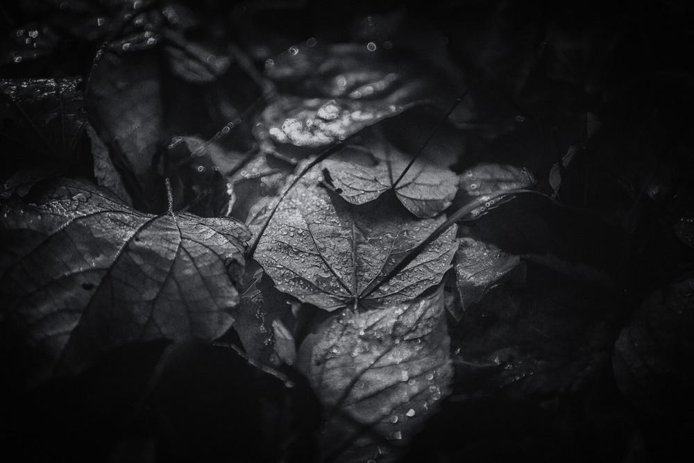 leaves--15
