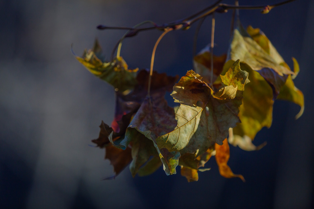 Leaves  20 Photography Art   Sandy Adams Outdoorvizions Photography
