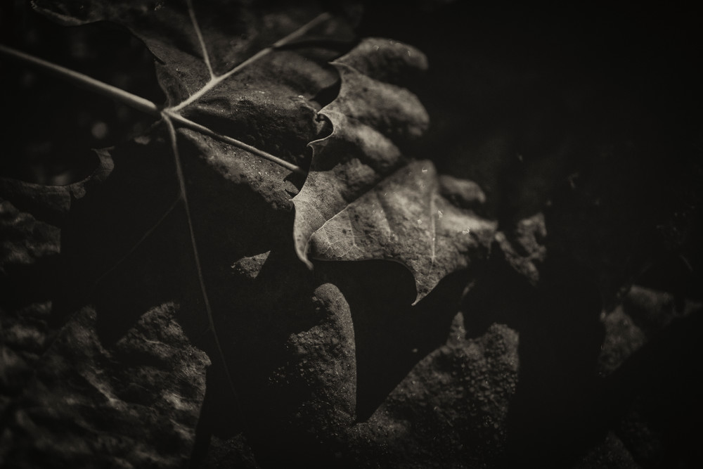 Leaves  70 Photography Art | Sandy Adams Outdoorvizions Photography