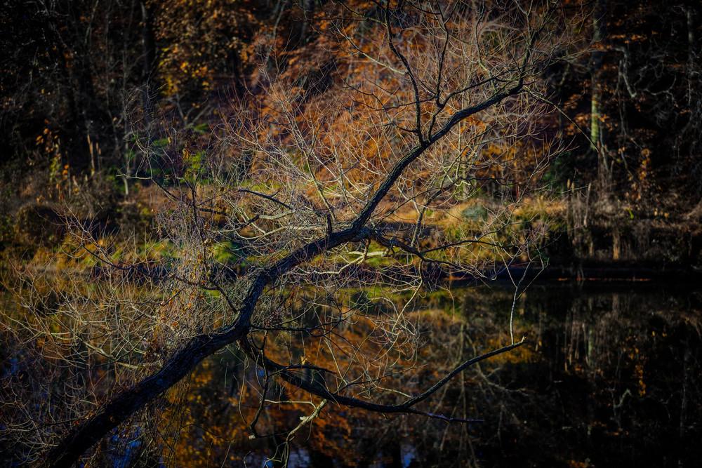 trees-0660