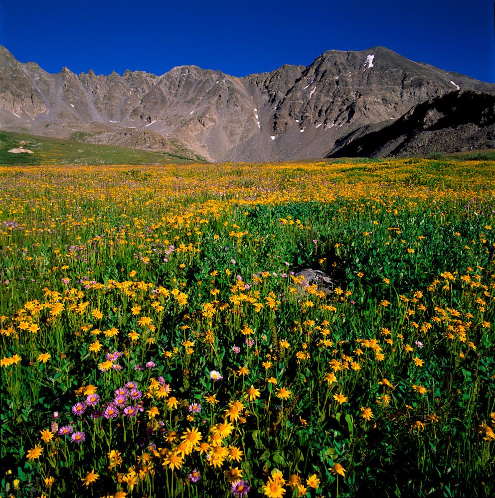 SUM-T082 • Sea of Wildflowers