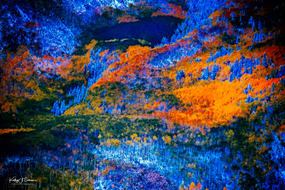 Forest In Fallscape Photography Art   Images2Impact