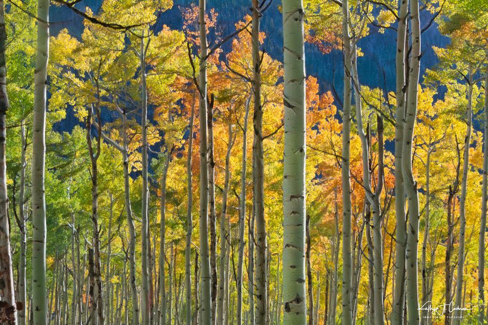 Aspen Glow Photography Art   Images2Impact