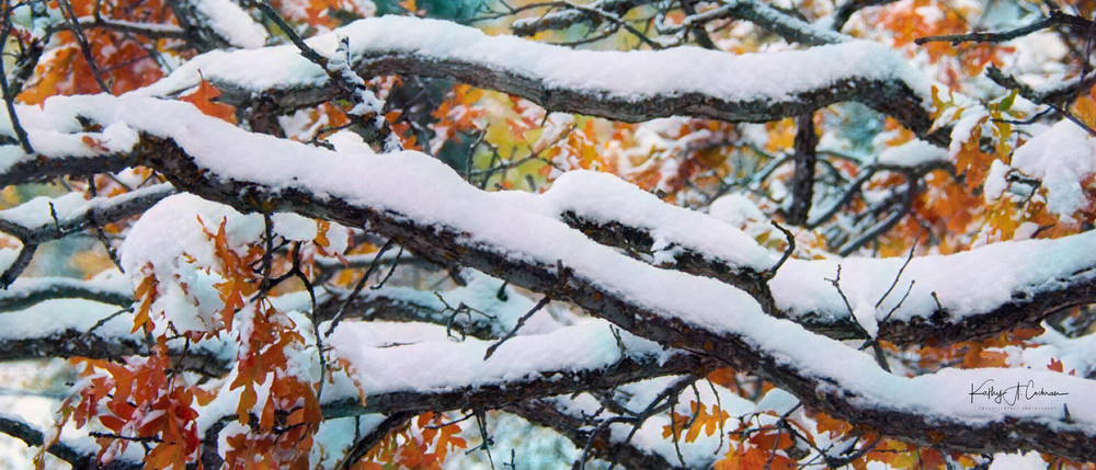 Colors Of Winter 2 Photography Art   Images2Impact
