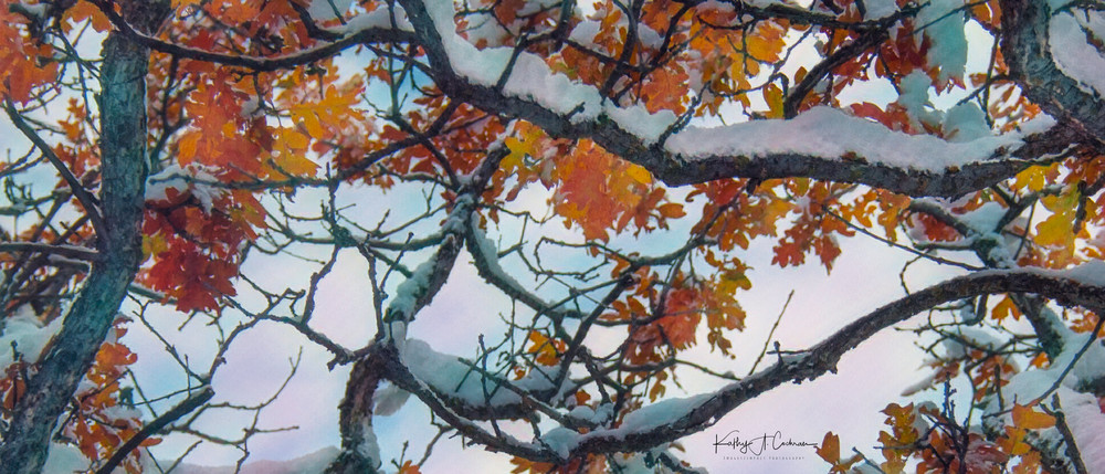 The Color of Winter 3