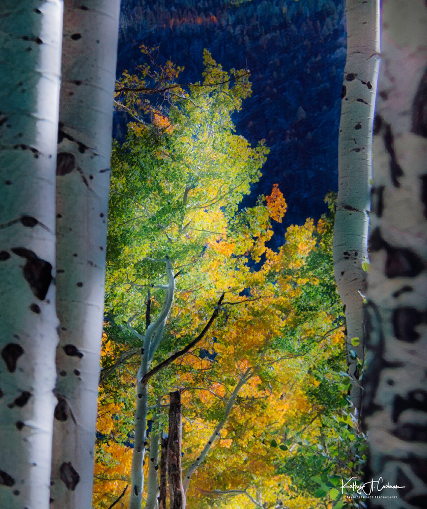 Framed Aspen Photography Art | Images2Impact