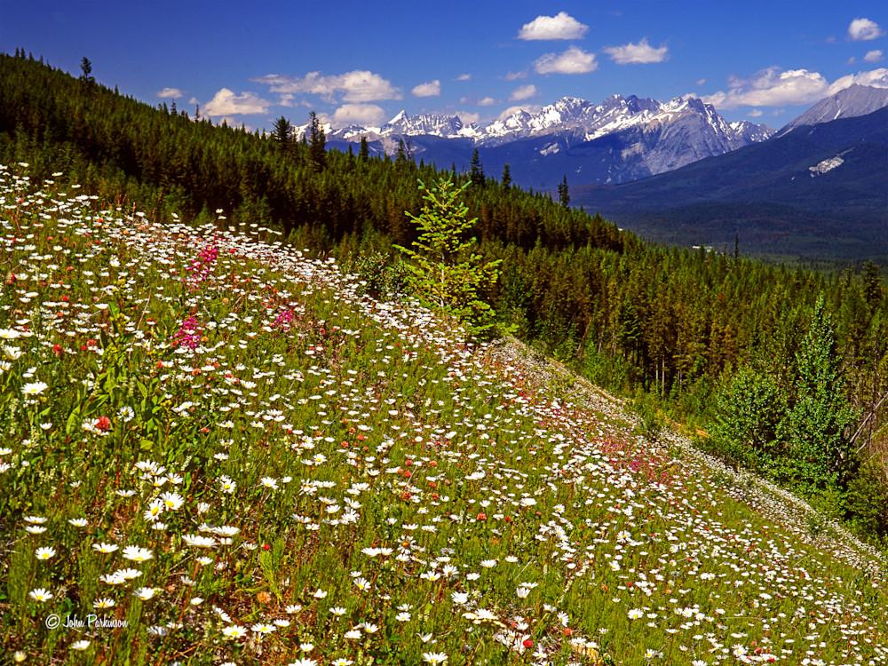 Kootenay Wildflowers, kootenay National Park, Canada
