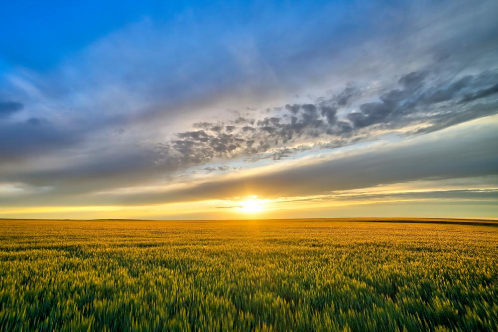 Golden Grain Photography Art | Craig Edwards Fine Art Images