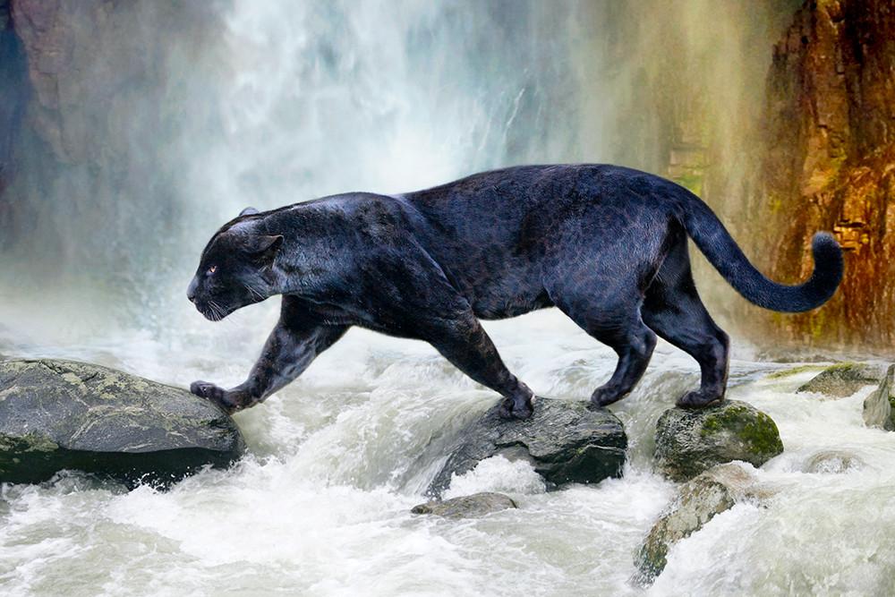 black-panther-2017