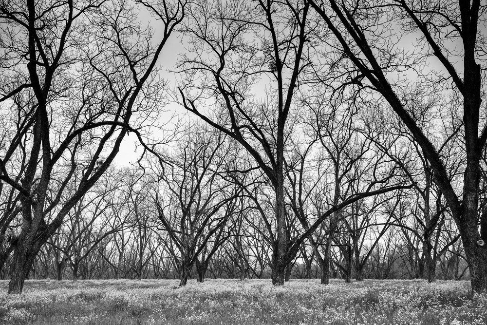 Trees  47 Photography Art | Sandy Adams Outdoorvizions Photography