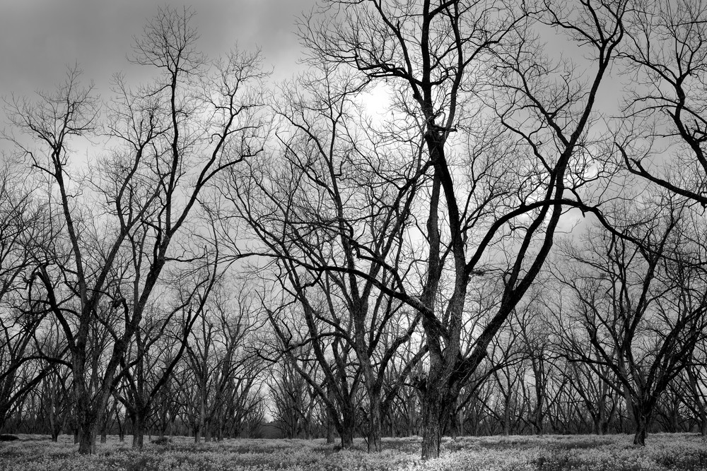 Trees  48 Photography Art | Sandy Adams Outdoorvizions Photography