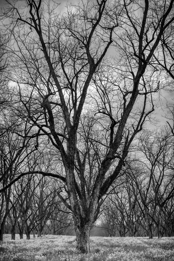 Trees  51 Photography Art | Sandy Adams Outdoorvizions Photography