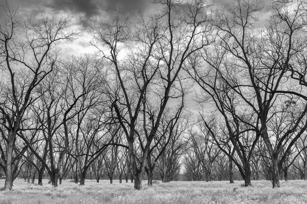 Trees  52 Photography Art | Sandy Adams Outdoorvizions Photography