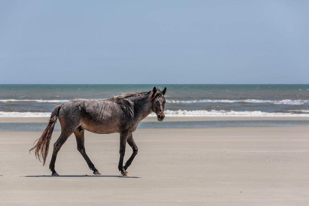 Wild Stallion of Cumberland