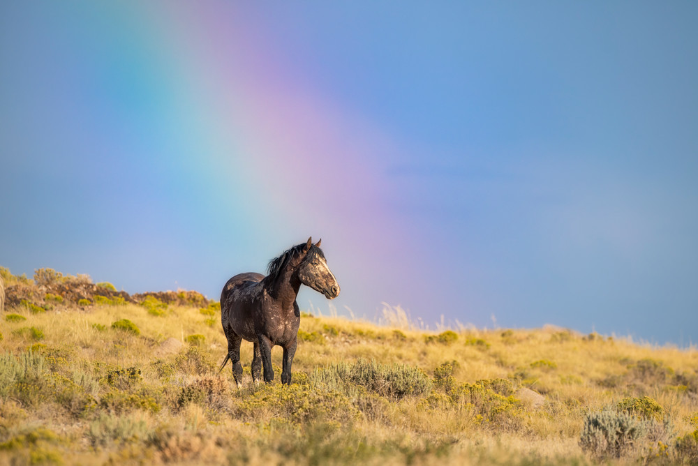 1755 Rainbow Warrior