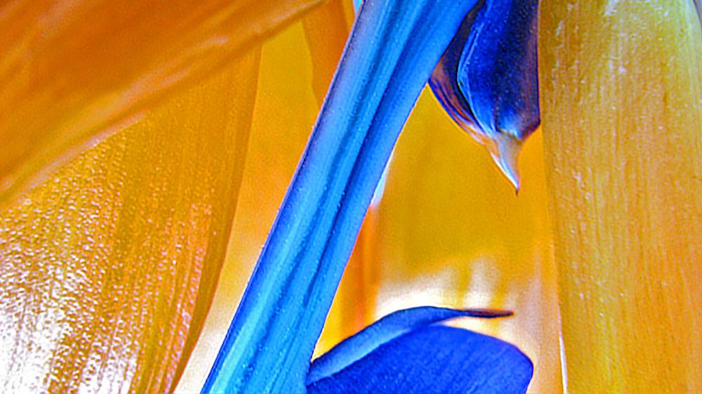 Bird Of Paradise 4 Photography Art | alexanderblackphotography