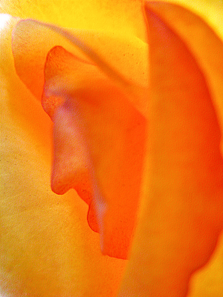 Face in the Rose 2