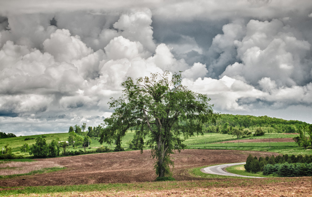 Winchell Mountain Elm and amazing clouds