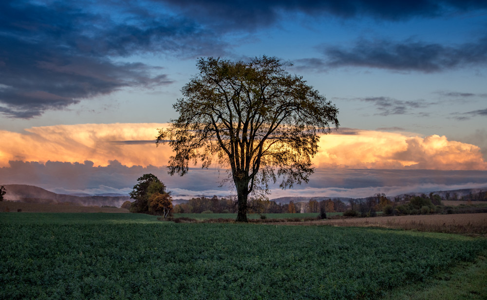 Elm Tree with gorgeous colorful sky