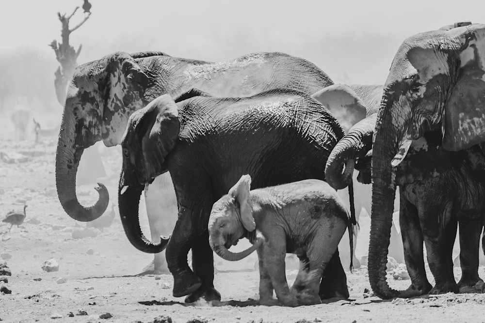 Steve Woodford, photo, Namibia, Africa, Elephant Act
