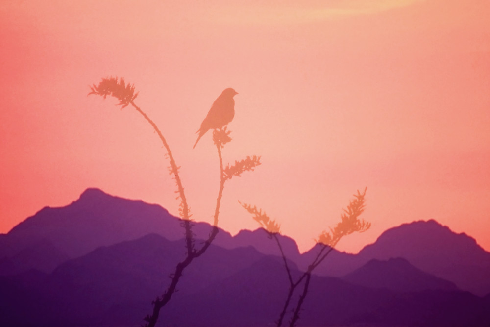 Evening Song color photograph bird mountains