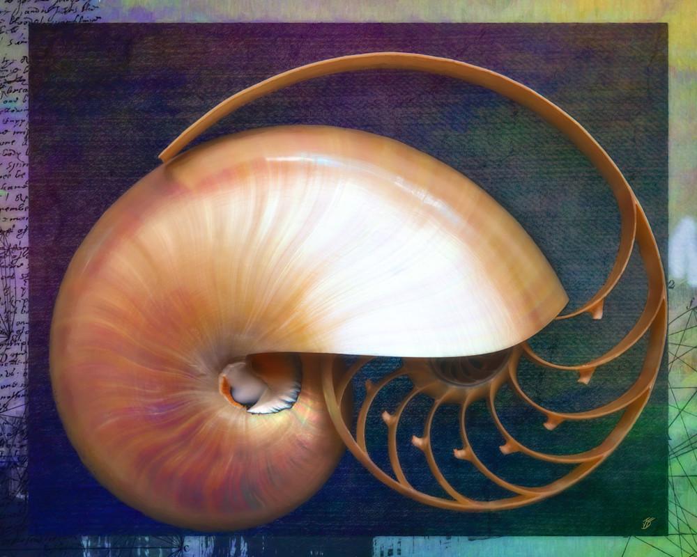 Fine Seashells Overarching Nautilus