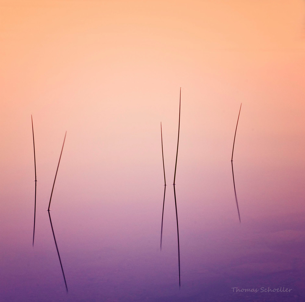Minimalism in Fine Art abstract nature photography/Pond Reed prints available by Thomas Schoeller