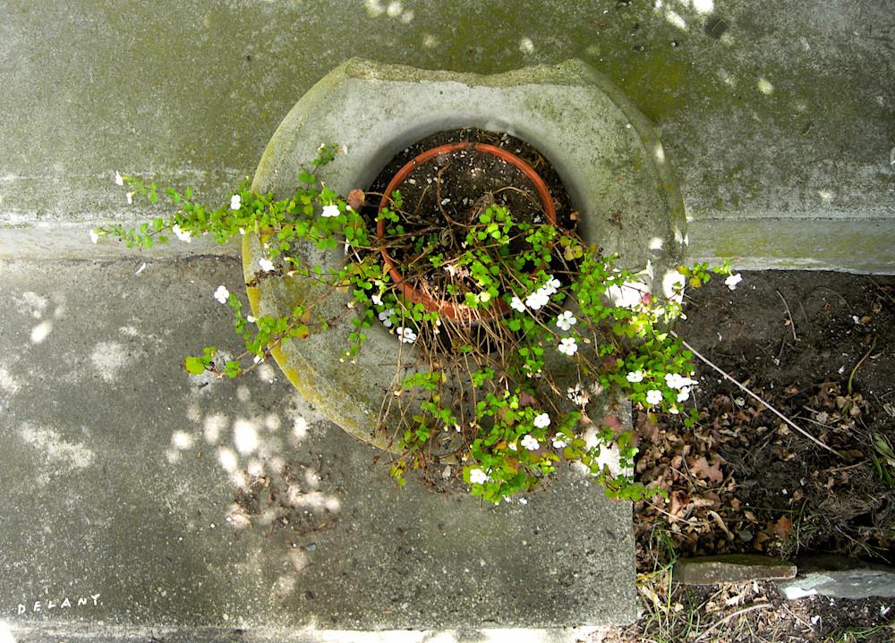 Planter Photo Art Print