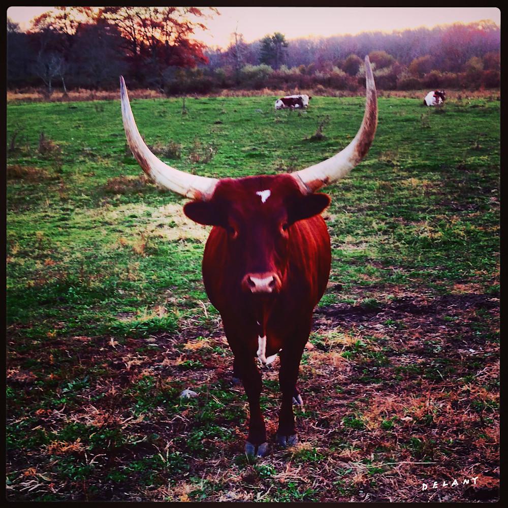 Watusi Cattle Instagram Print