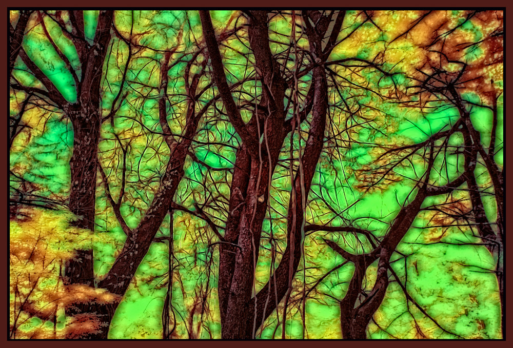 Trees Like Stained Glass Photography Art   Peter J Schnabel Photography LLC
