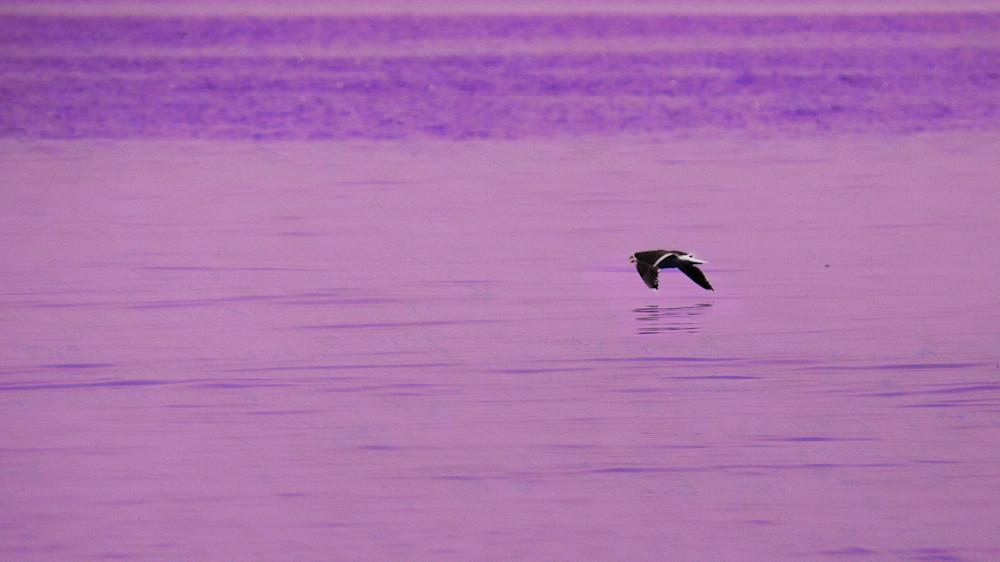 The seas of purple