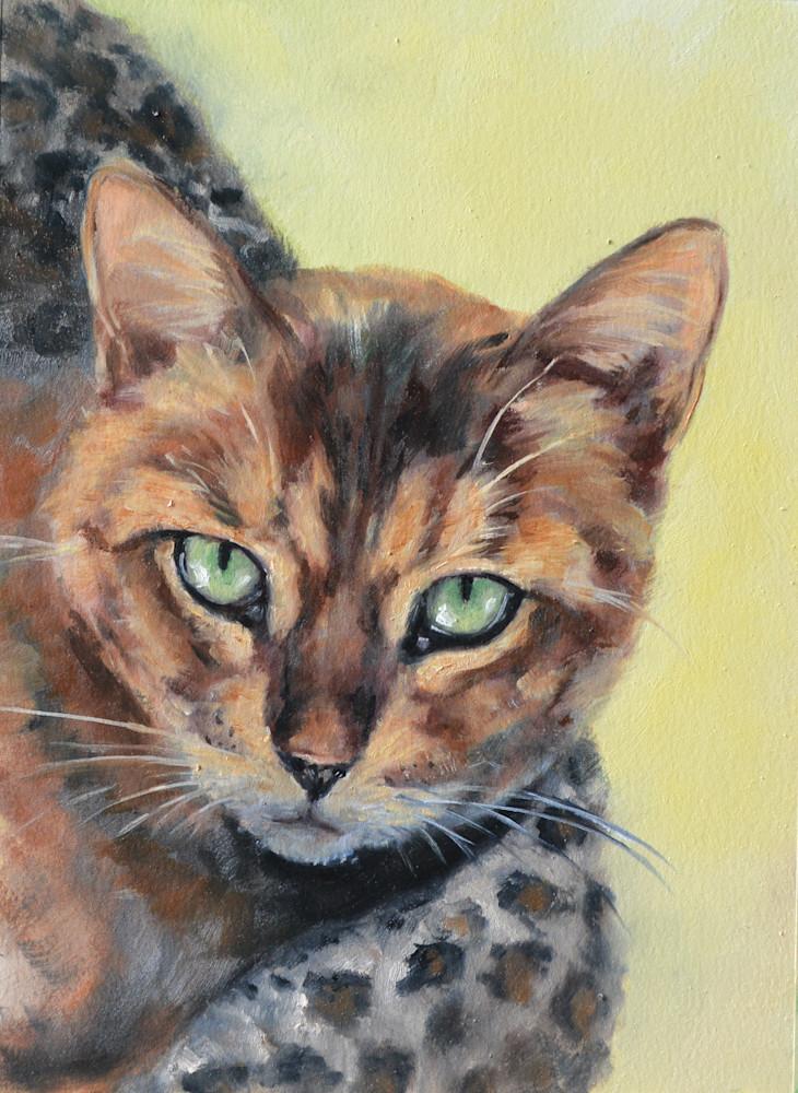 Kiana Bengal Cat